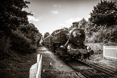Crossing (aljones27) Tags: nvr nenevalleyrailway peterborough ferrymeadows 1501 steam train engine sepia monochrome toned
