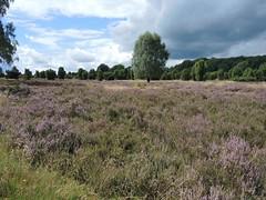 LneBurger Heide (willi_bremen) Tags: lneburgerheide niedersachsen nikoncoolpixp7700 landschaft landscape deutschland