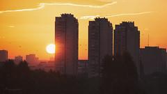 early birds (cherryspicks (intermittently on/off)) Tags: sunrise zagreb croatia birds sun orange yellow urbanlandscape architecture buildings early
