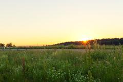 Good night, sleep light, stranger (surfingstarfish) Tags: sonne sonnenuntergang sunset sun meadow wiese feld field summer sommer sky himmel evening abend nature natur outdoor strase glow shine sonnenschein sommerabend sunshine