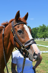 2016-08-28 (10) Miss Nicole arrives at 'horse show' (JLeeFleenor) Tags: photos photography md maryland horseshow gambrills horses thoroughbreds equine equestrian cheval cavalo cavallo cavall caballo pferd paard perd hevonen hest hestur cal kon konj beygir capall ceffyl cuddy yarraman faras alogo soos kuda uma pfeerd koin    hst     ko