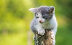 kittens (17) (Vlado Fereni) Tags: kitty kittens cats catsdogs zagorje croatia animals animalplanet hrvatska hrvatskozagorje nikond600 tamron9028macro