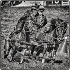 Horse and cart racing action! (Andy J Newman) Tags: avening england unitedkingdom gb horse horsetrials cart gatcombe park britisheventing race nikon d7100 silverefex
