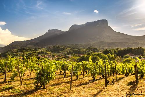 Mont Granier dans les vignes