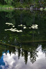 Forest Reflections (bjorbrei) Tags: water lake pond tarn reflections forest trees waterlilies marka lillomarka oslo norway