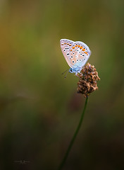 (Pablo RG) Tags: insecto mariposas macrofotografia