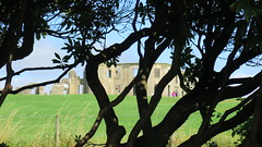 Downhill (Katie_Russell) Tags: downhill demesne tree trees shadow shadows branch branches leaf leaves castlerock nationaltrust coderry colderry colondonderry countyderry countylderry countylondonderry lionsgate