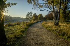 Yorkshire Sculpture Park (pixel--shift) Tags: review yorkshire sculpture park ysp autumn light f22 sunstar