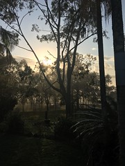 Misty morning (Gabbie98) Tags: goldenhours nsw australia iphone photographer photography mountains sky nature trees morning most sun