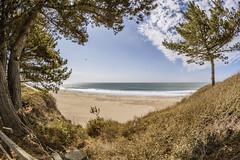 Cove Beach (matman73072) Tags: cove beach sand sky surf ocean clouds fisheye anonuevo california trees
