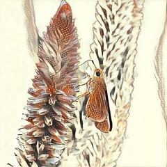 Digital Skipper on a flower (AngelVibeDigital) Tags: blossom celosia digitalart paintedflowers butterfly art skipper