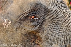 Eye of an elephant (SleekViv) Tags: elephant eye nature animal thailand zoo nikon d90 totallythailand