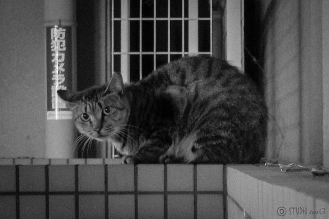 Today's Cat@2012-10-12