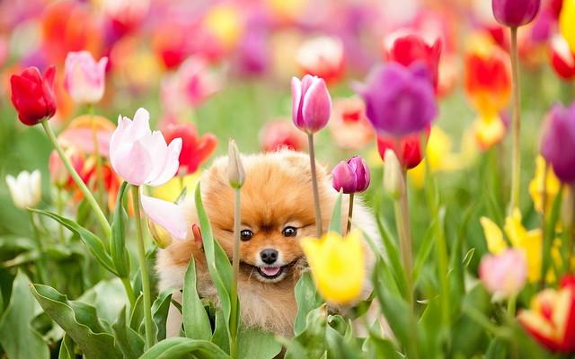 Собачка в поле