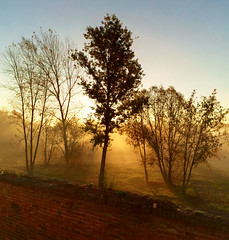 Look outside the monastery //     (Alunyo) Tags: old morning autumn trees brick fog wall forest sunrise russia      kolomna       golutvin  pblc
