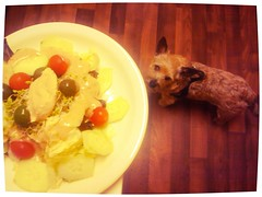 Dinner Salad (Vegan Feast Catering) Tags: tomato salad vegan eggplant cucumber spice olive lettuce sprouts chickpea bibb cutenorwichterrier