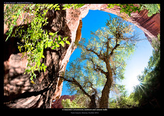 Cottonwood Tree Perspective (Jason Hummel Photography) Tags: arizona canyon backpacking sunburst pariacanyon cottonwoodtree pariariver buckskincanyon