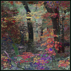 Forest Colours. Explore Oct 15, 2012 #289 (Tim Noonan) Tags: trees light shadow red colour green texture leaves yellow digital forest photoshop fence violet explore shining mosca hypothetical vividimagination artdigital greenscene shockofthenew stickybeak sharingart maxfudge awardtree maxfudgeawardandexcellencegroup exoticimage digitalartscene netartii donnasmagicalpix vividnationexcellencegroup