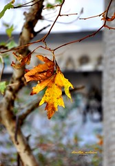 fall in the fallen  time (dimitra_milaiou) Tags: life old autumn friends light people brown mountain colour tree green fall abandoned love nature colors beautiful beauty leaves yellow architecture lens greek gold hotel golden leaf still nikon october missing ruins europe poetry seasons time earth d hellas athens greece thoughts silence planet xenia damaged past 90 feelings 2012 flickers dimitra parnitha attiki d90 philoxenia  18105mm           milaiou