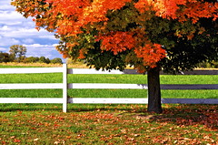 Greenock Road (Baab1) Tags: horses bw fallleaves fall clouds fallcolors fences autumncolors blueskies polarizer fallenleaves mapletrees southernmaryland autumndays nikond300 lothianmaryland annearundelcountymaryland marylandhorsefarms autumnscenics mygearandme 1555nikkor28 lothianhorsefarms annearundelcountyhorsefarms