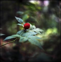 wild berry (zenog) Tags: cabana