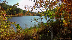 One Horse Gap Lake (3756) (sbuck1205) Tags: fallcolors shawneenationalforest onehorsegaplake