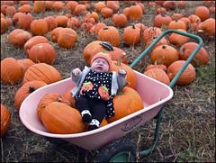 Gathering Punkins (NoJuan) Tags: family nikon pumpkins pumpkinpatch nikoncoolpix995