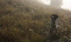 Mastik (bulbocode909) Tags: nature automne brouillard chiens