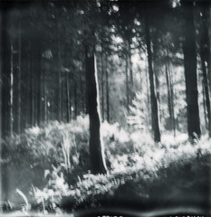 (PX 100) (So gesehen.) Tags: light blur forest schweiz switzerland blurry woods shadows lofi px100 polaroid2000 silvershade impossibleprojectfilm