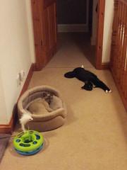 sooooo tired (cox-on-the-box - art, clay, cats, veg) Tags: catnipaddicts flickrandroidapp:filter=none
