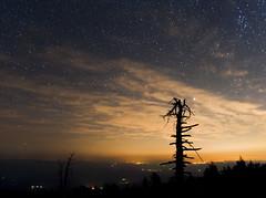 Night on Mary's Peak (benalesh1985) Tags: longexposure sky mountain tree night clouds oregon stars landscape nightscape corvallis afterdark maryspeak