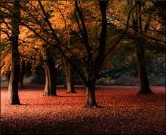 October days (Marie Granelli) Tags: autumn tree skne october sweden explore sdersltt d3000