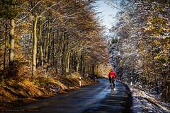 Cycling Eisenstrae (Torsten Frank) Tags: road schnee autumn snow fall bike bicycle sport deutschland cycling herbst wald selbstportrait baum nordrheinwestfalen fahrrad granturismo wittgenstein rennrad radfahren radsport mittelgebirge laubbaum strase rothaargebirge grosenbach benfe wiliertriestina eisenstrase dilllahnederquellgebiet