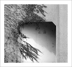 Creeping Along (Demmer S) Tags: ivy vine plant foliage leaves architecture architectural surface wall facade exterior covered invasion vines climbing creeping invading invasive monochrome blackandwhite blackwhite blackwhitephotos blackwhitephoto urban streetphotography street streetshots walls wallscape simple minimal minimalism minimalist minimalistic geometry concrete archidose bw texture nature frame border framed photoborder