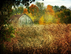 The Barn (Danica (Mariella Tammas)) Tags: autumn trees color fall colors field leaves barn cornfield thegalaxy flickraward magicunicornverybest