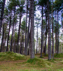 "Tentsmuir Beach • <a style=""font-size:0.8em;"" href=""http://www.flickr.com/photos/53908815@N02/8145177276/"" target=""_blank"">View on Flickr</a>"