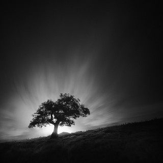 ѱ - Tree 1 XI