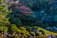 Shouren-in Temple, Kyoto, Japan,   (Akiko Morita) Tags: travel autumn light holiday inspiration plant flower history love nature japan architecture garden landscape photography japanese photo kyoto image gardening vibrant joy picture jardin historic momiji serenity   romantic meditation    inspirational maples  horticulture  japon     sensation                        shourenin