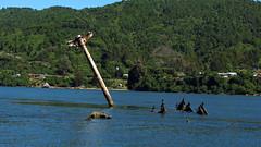Valdivia (Steph Hauyon W) Tags: chile barco valdivia