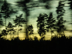 ghost trees (christiane wilke) Tags: winter sunset sky motion train germany landscape deutschland movement sonnenuntergang himmel zug landschaft icm intentionalcameramovement