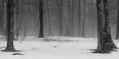 Winter Weary (rpantaleo) Tags: blackandwhite unitedstates maryland swanton