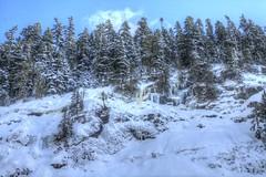 Ice (Andrew E. Larsen) Tags: papalars andrewlarsenphotography