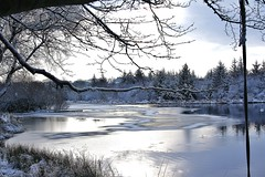 031 (Daniel Frizzel) Tags: winter lake tree ice water scotland frozen pond frost branch branches loch spotiswoodsnow