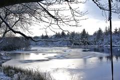 031 (Daniel Frizzel) Tags: winter lake tree ice water scotland frozen pond frost branch branches loch spotiswoodsnow