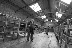 End of a busy day at Leek Auctions (The Rural Eye) Tags: camera food west eye english rural newcastle landscape photography james cow photo spring student october university photographer shropshire sheep cheshire image market sale farm auction district derbyshire traditional farming flock north under archive picture culture photojournalism documentary peak william bull meat professional lee land production british humphrey farmer ba tradition agriculture dairy livestock leek staffordshire herd hughes journalism lyme degree 2012 freelance mart midlands spender llp heifer farmsale ravilious leewilliamhughescom
