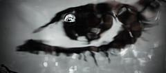 Teardrop (Valentina White) Tags: white black water girl canon eos eyes tears sweet attack drop massive splash teardrop conceptual acqua goccia 650d