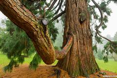 tree 'trunk'