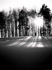 One winter day (R A Pyke (SweRon)) Tags: trees winter blackandwhite bw sun sunlight snow tree silhouette day pentax sweden k5 rebro directfromcamera smcpentaxfa50mmf14 incamerabwconversion sweron 201301196530