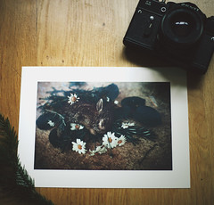 Daisy (daphne og.) Tags: camera wood art vintage print photography floor daisy thrifting freelensing