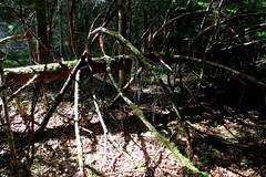 Wald wood (Spiranthes2013) Tags: deutschland germany bayern bavaria niederbayern lowerbavaria 2016 nature natur lkregen zwiesel zwieselerwaldhaus wald wood forest lichtundschatten